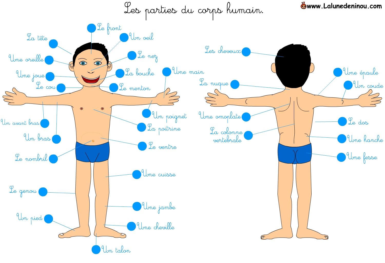 """Résultat de recherche d'images pour """"corps humain enfant"""""""